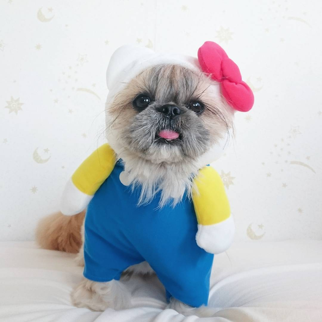 гламурная собачка