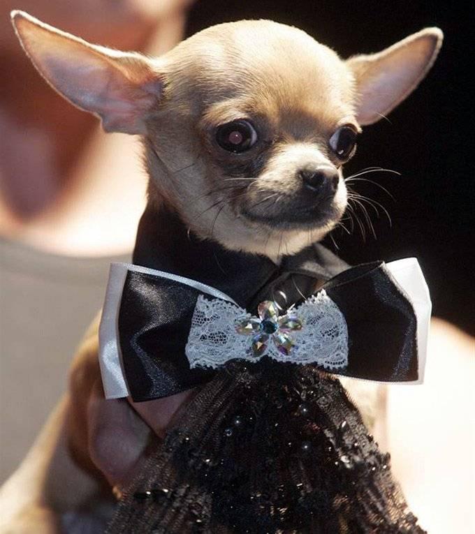 модная одежда для кошек и собак