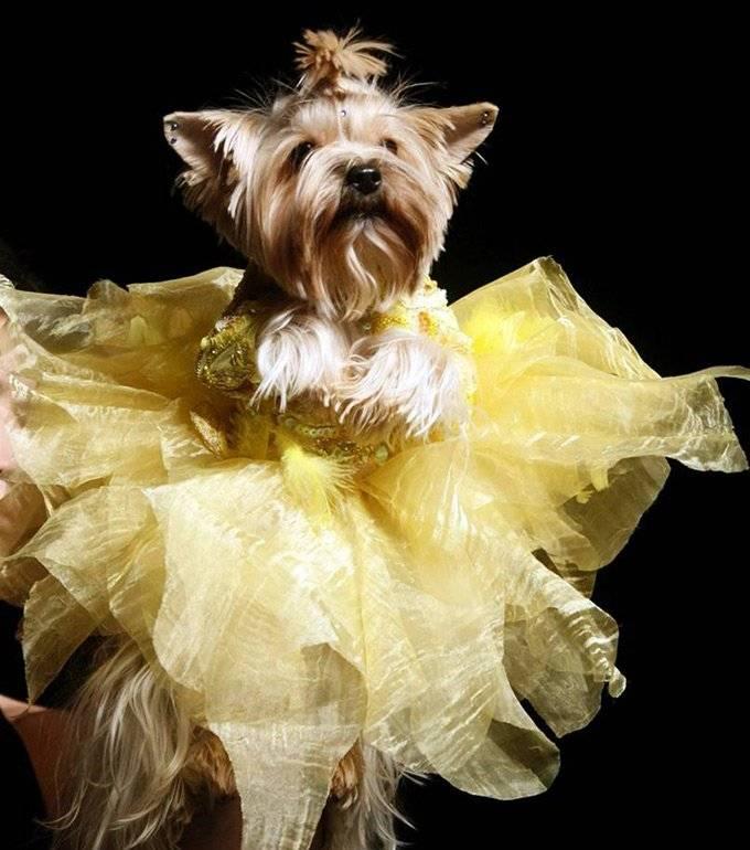 мода для кошек и собак