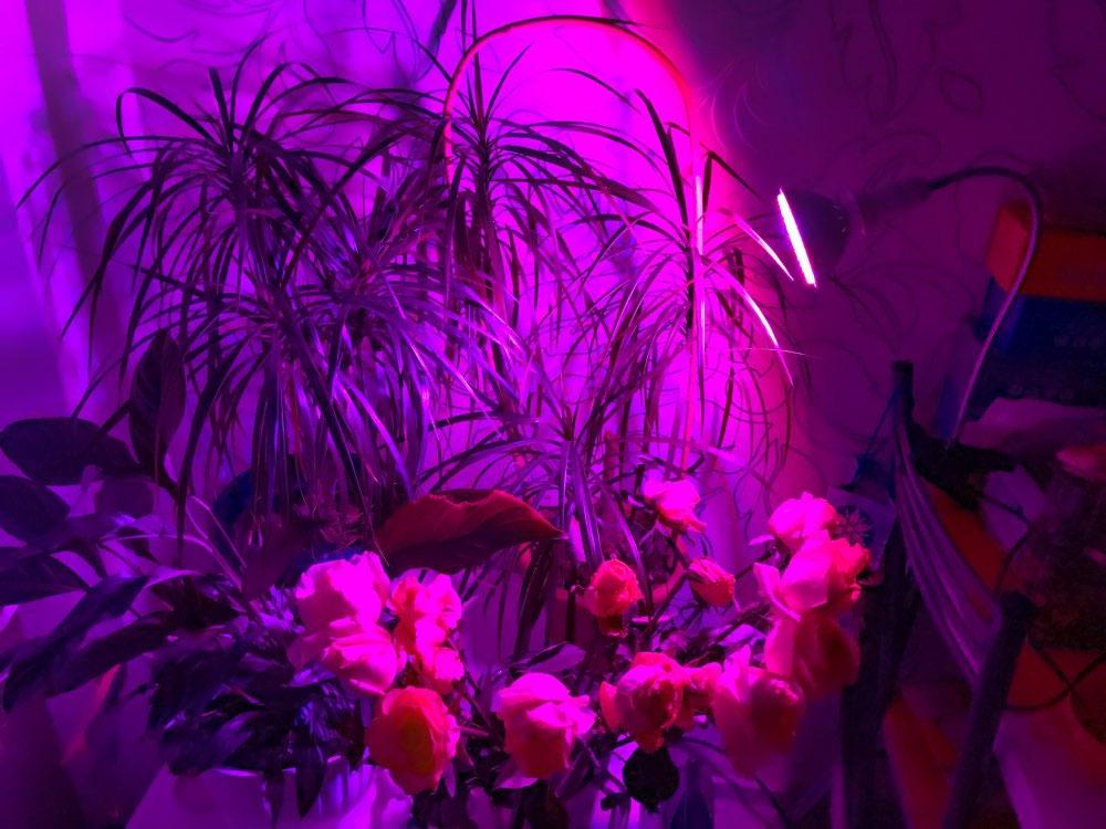 Лед лампа для комнатных растений