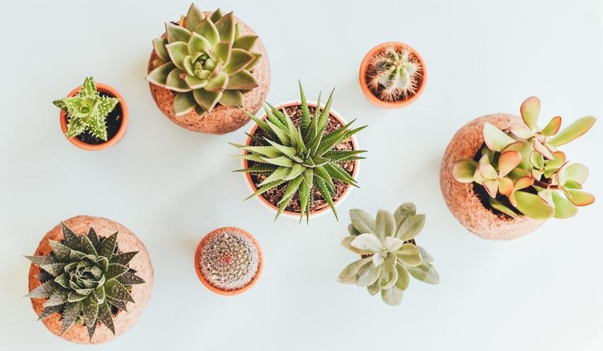 Выбираем комнатные растения по знаку зодиака